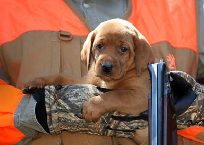 6 weeks field hunting
