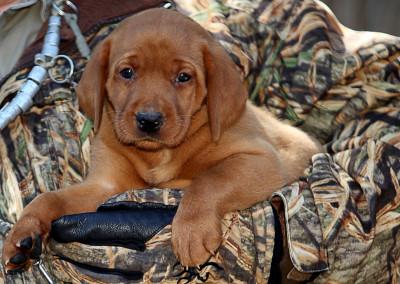 6 weeks hunting pic